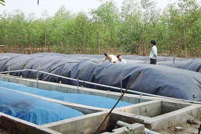 Biến nguồn nước thải từ chuồng lợn thành nước pha trà